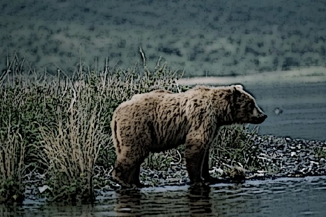 Red Dead Redemption Bear Guide Venture Articles